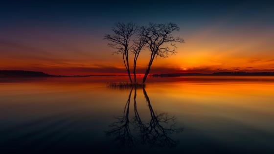 Lone tree in the sunset wallpaper