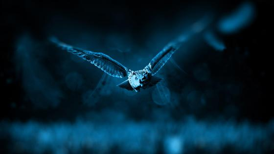 Flying owl  wallpaper