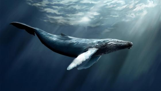 Humpback whale graphics wallpaper