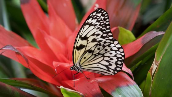 White butterfly on the flower - Macro photography wallpaper
