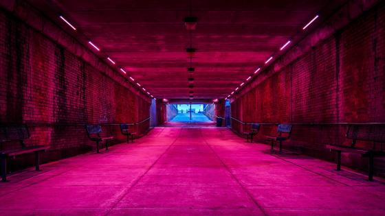 Pink corridor wallpaper