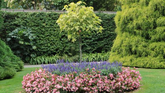 Close up of a flower garden wallpaper