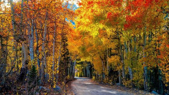 Road in the autumn forest    wallpaper