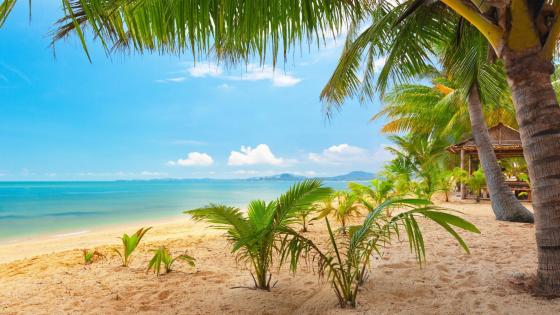 Palm trees on the sandy beach wallpaper