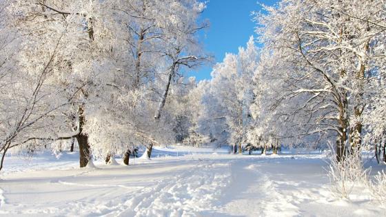 Snowy winter landscape ❄️ wallpaper