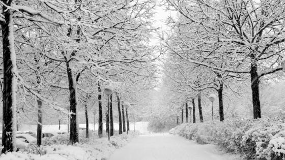 Winter tree alley - Monochrome photography wallpaper