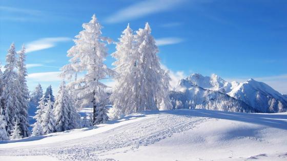 Frosty winter landscape wallpaper