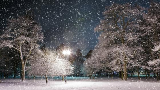 Snowing in the park at night wallpaper