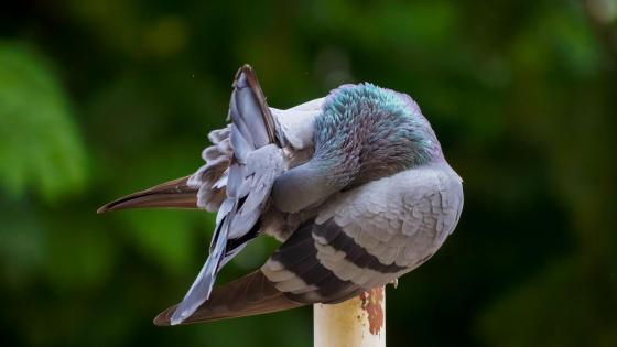 Bird in the morning wallpaper