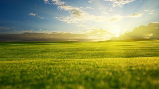 Spring sunlight in the field wallpaper