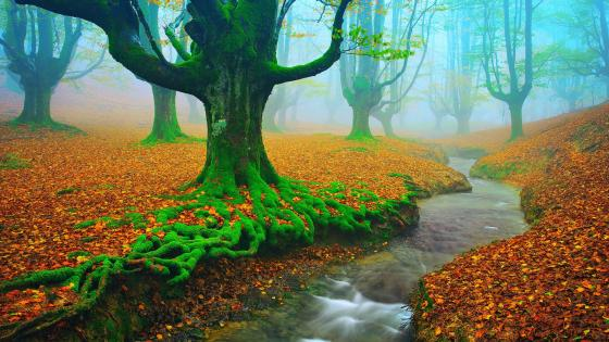 Gorbea Natural Park - Spain wallpaper