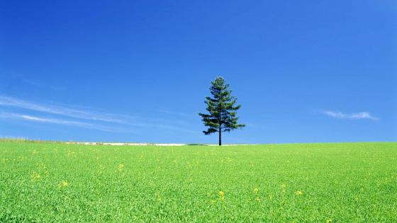 Lonely tree in the grassland wallpaper