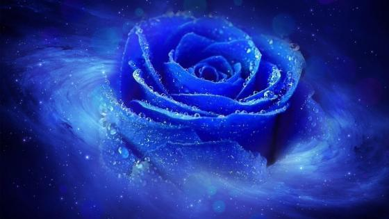 Cool blue dewy rose wallpaper