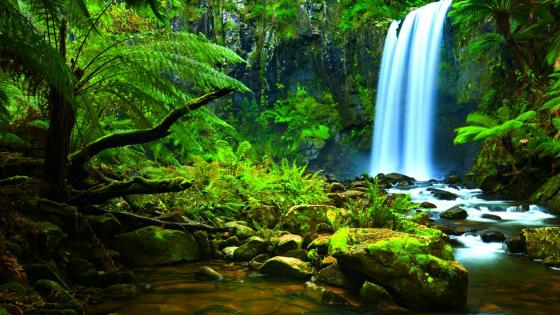 Amazon Rainforest waterfall wallpaper