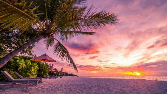 Sunset in the sandy beach wallpaper