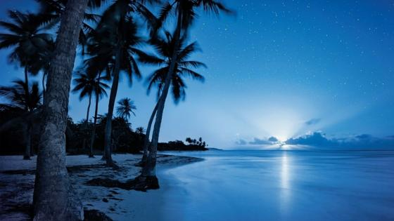 Starry night sky over the beach wallpaper