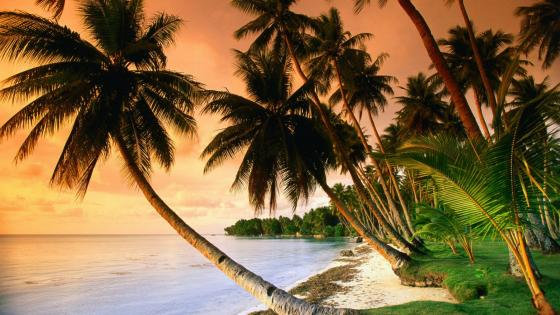 Exotic beach with palm trees in the sunset  wallpaper