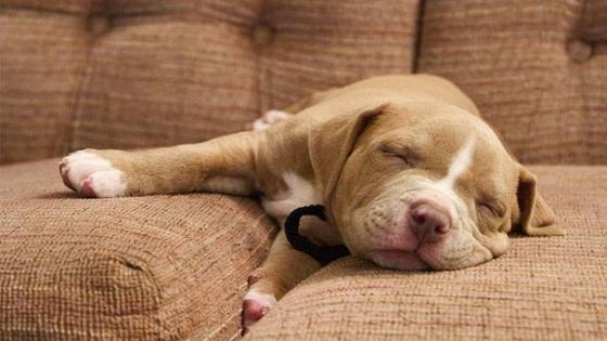 Sleeping puppy wallpaper
