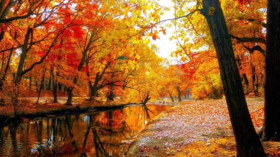 Colorful autumn trees in the park    wallpaper