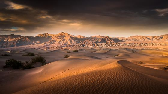 Sunrise over the Mesquite Flat Sand Dunes - Death Valley National Park wallpaper