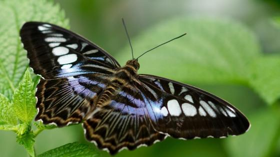 Butterfly - Macro photography wallpaper