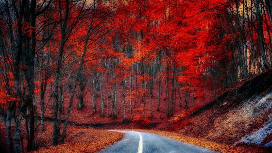 Redish autumn forest wallpaper