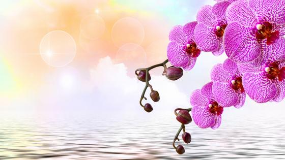 Orchid branches over the water artwork wallpaper