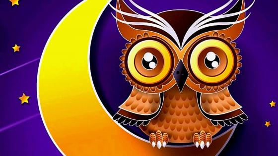 Cute owl sits on the moon illustration wallpaper