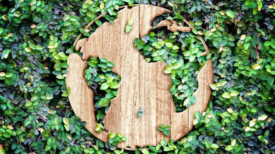 The Earth in Wood and Leaves wallpaper