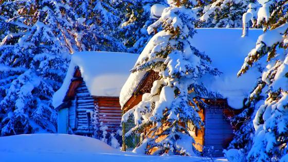Snowy landscape ️❄️ wallpaper