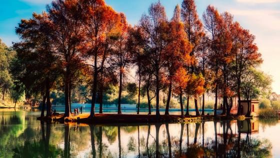 Autumn tree reflection wallpaper