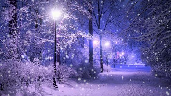 Snowing in the night park wallpaper