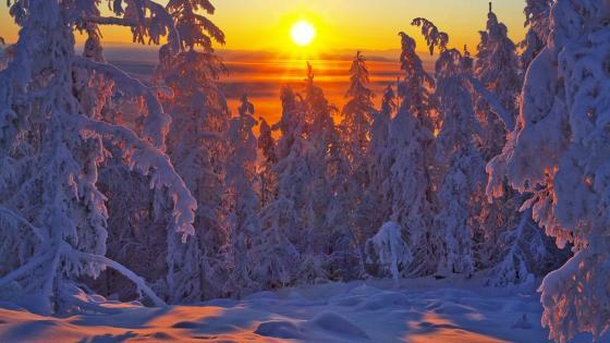 Snowy pine forest in the sunrise - Yakutsk, Russia wallpaper