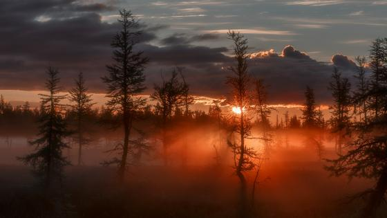 Morning twilight in the forest of Novy Urengoy, Russia wallpaper
