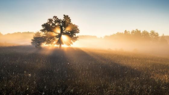 Lone tree in the rays of light wallpaper