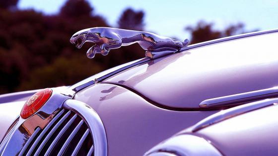 Jaguar logo on the bonnet wallpaper