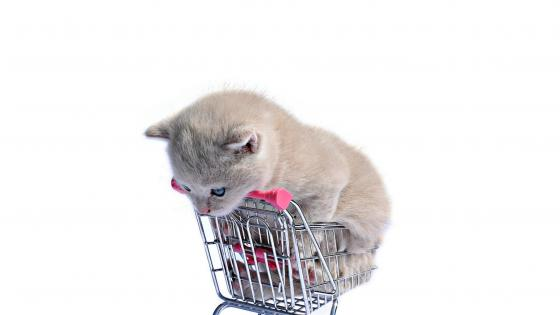 Cute kitten in a small shopping cart wallpaper