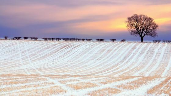Winter field under the snow wallpaper