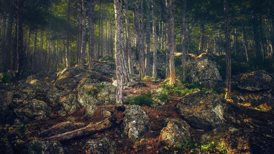 Deep forest in Crimean peninsula  wallpaper