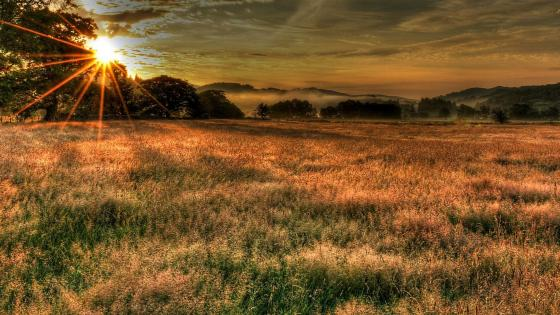 Sun rays over the field wallpaper