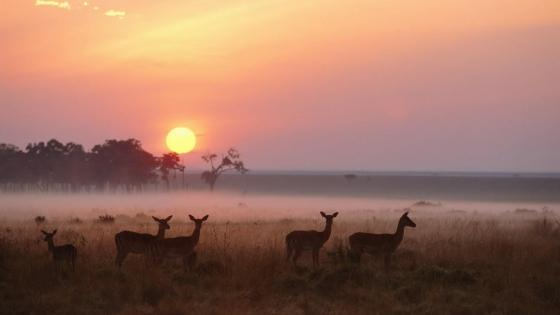 Sunrise over Maasai Mara National Reserve, Kenya wallpaper