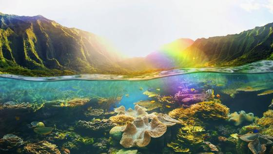 Hawaiian Coral Reefs wallpaper