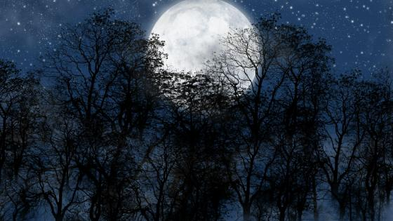 Full moon on the starry sky wallpaper
