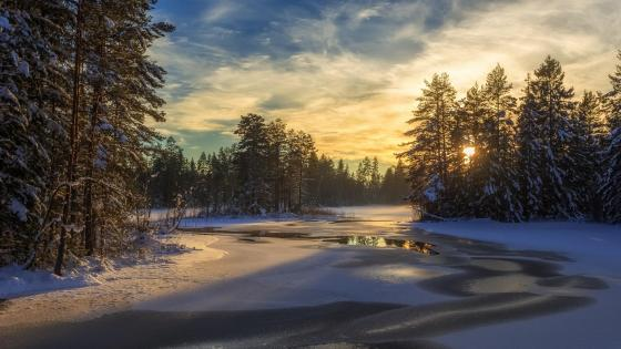 Frosted river in the snowy forest wallpaper