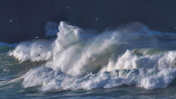 Seagulls over the huge ocean wave wallpaper