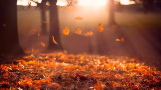 Red leaves in the autumn sunrays - Nature photography wallpaper