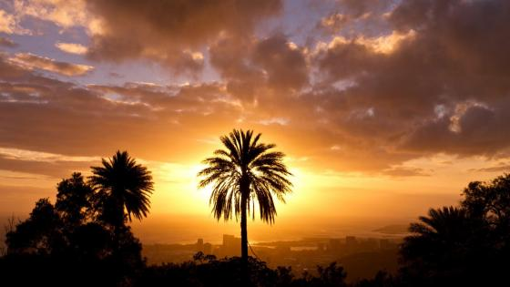 Palm tree silhouette in the sunset wallpaper