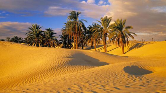 Sahara oasis between sand dunes wallpaper
