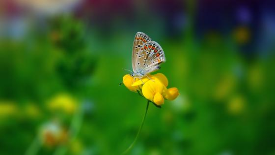 Butterfly on the yellow flower  wallpaper