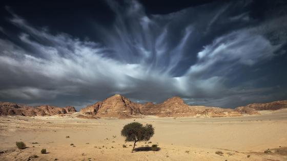 Lone desert tree wallpaper